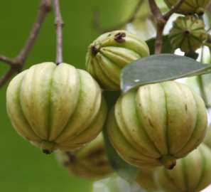 Garcinia cambogia extract drug interactions :: Mediterranean diet